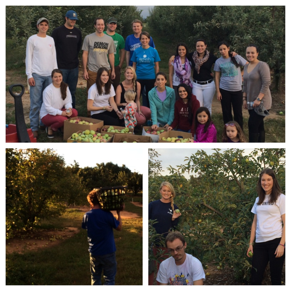 This is a picture of our United Way YP20 Group Gleaning at the Nivens Apple Orchard in Spartanburg. Our group gleaned over 1800 pounds of apples to take to local food shelters to serve the homeless and support some of our non-profit organizations. This is one of my favorite events that we do during the year.
