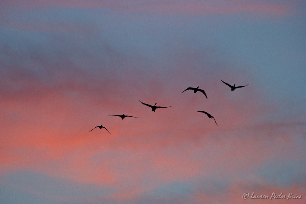 On the Wing © Lauren P. Brice, Four Rivers Photo