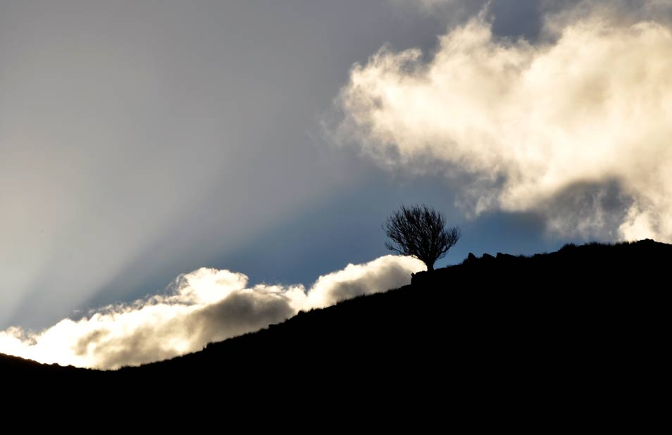 Wales-lonely-tree-on-the-hi.jpg
