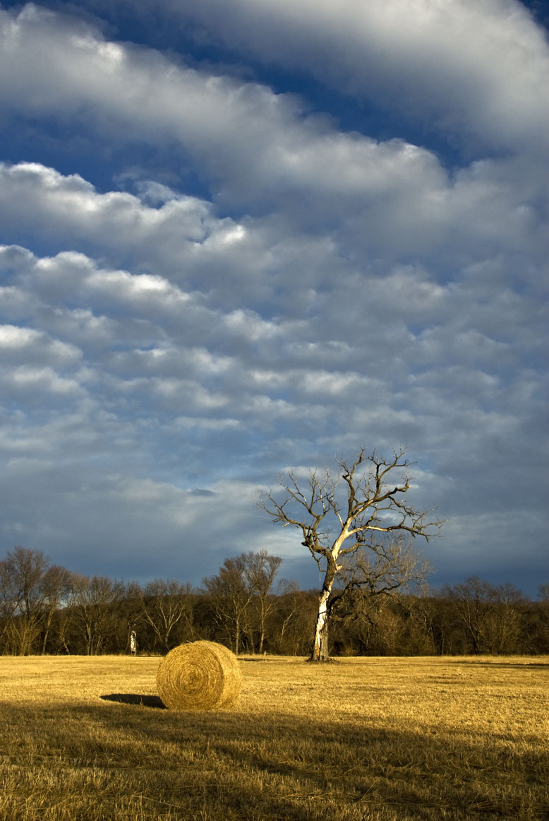 USA-tree-in-field-w-hay-bal.jpg