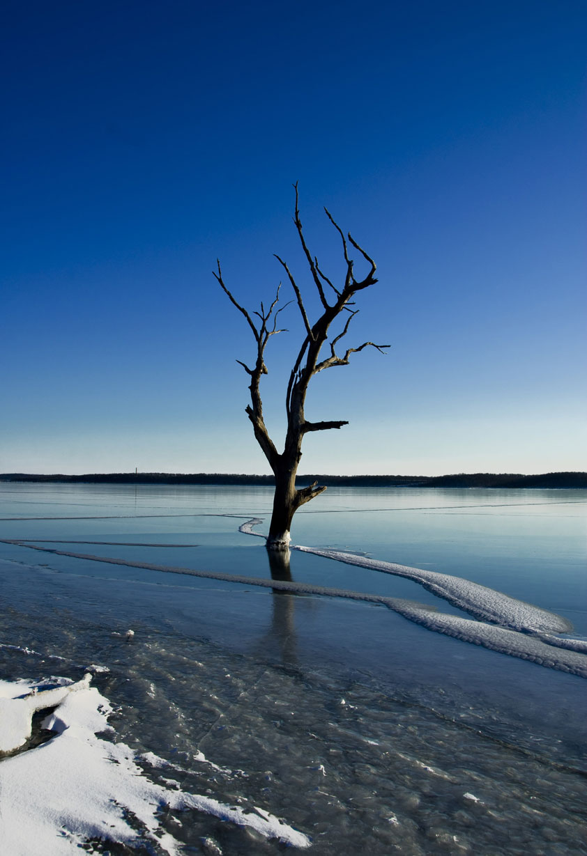 USA-Tree-on-icy-lake-jpg.jpg