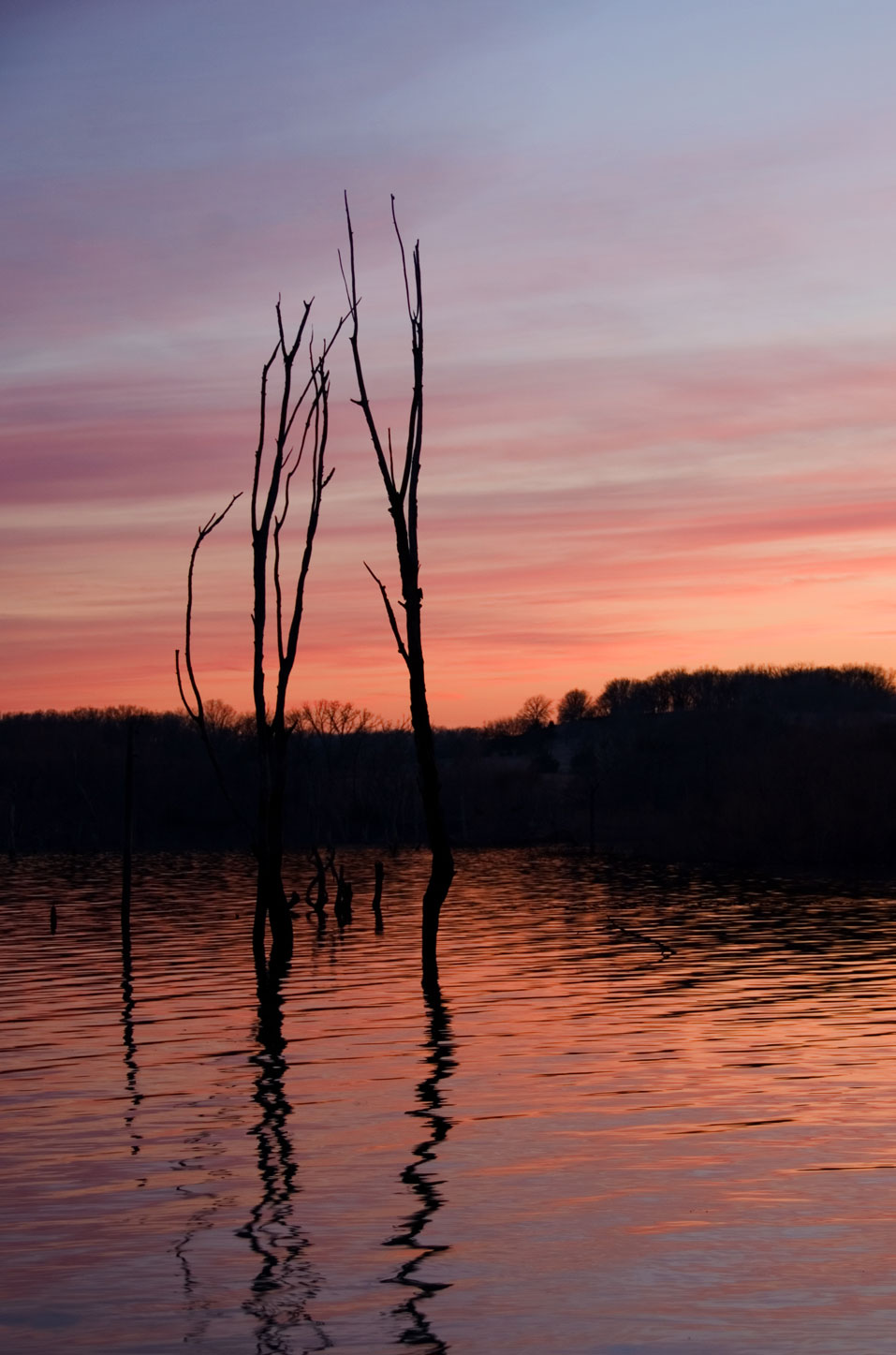 USA-two-thin-trees-at-sunse.jpg