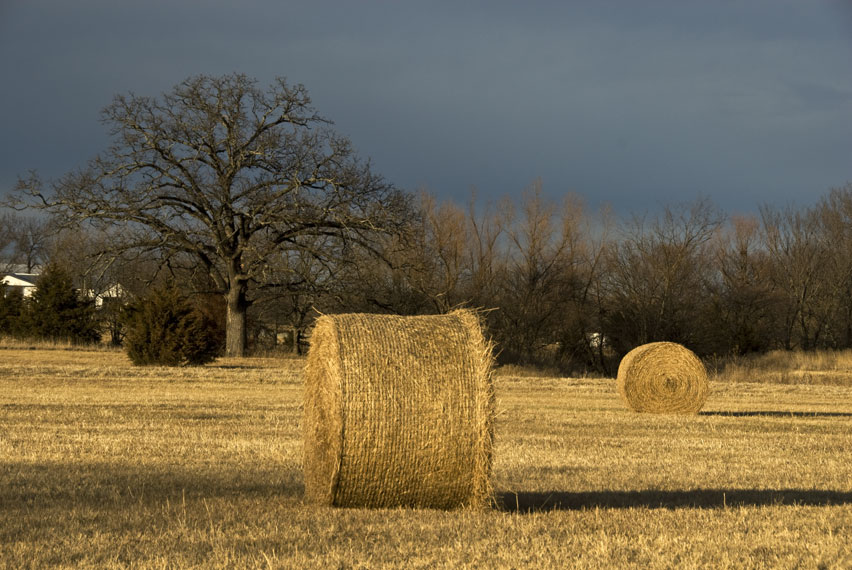 USA-hay-bales-in-field.jpg