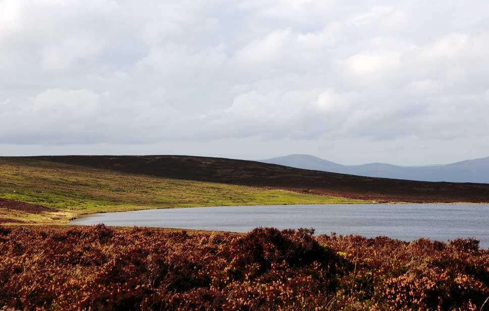 Wales-moors-near-Dylife.jpg