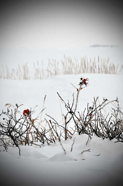 Hanko-twigs-on-snowy-beach-.jpg