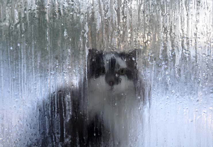 Marius-freezing-cat-1-Jan-1.jpg