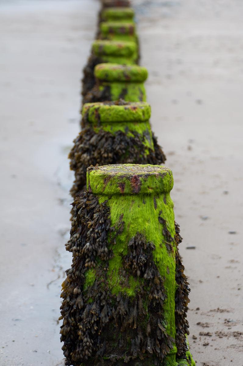 Wales-algea-on-poles-Ynyslas-010614.jpg