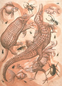 Crocodiles, Hens, Beetles, Armadillos & Fish (do not evince any remarkable partiality for man)