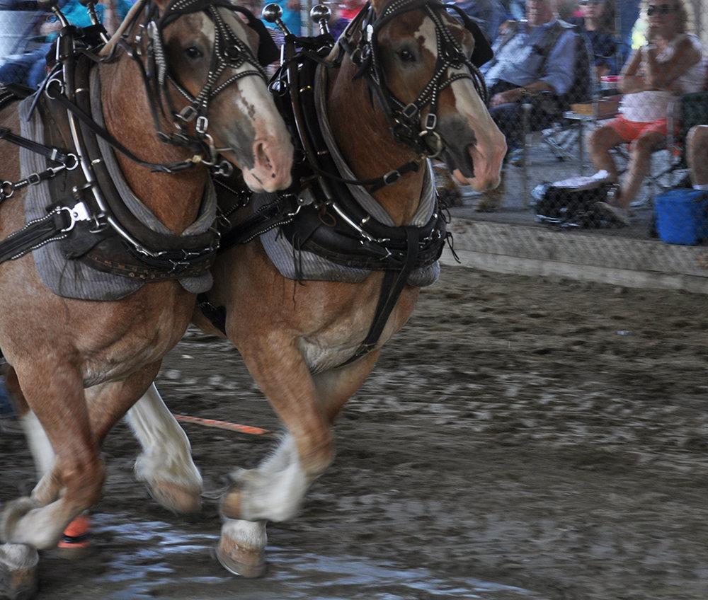 horsepull4.jpg