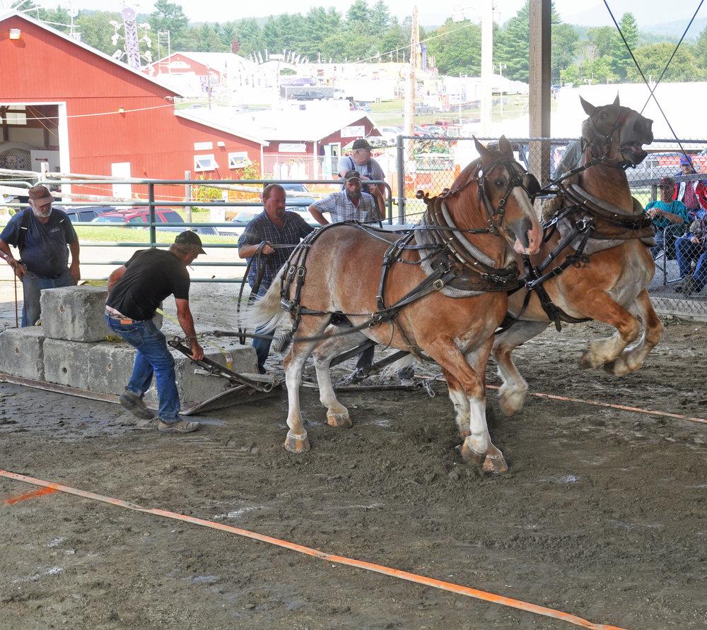 horsepull1.jpg