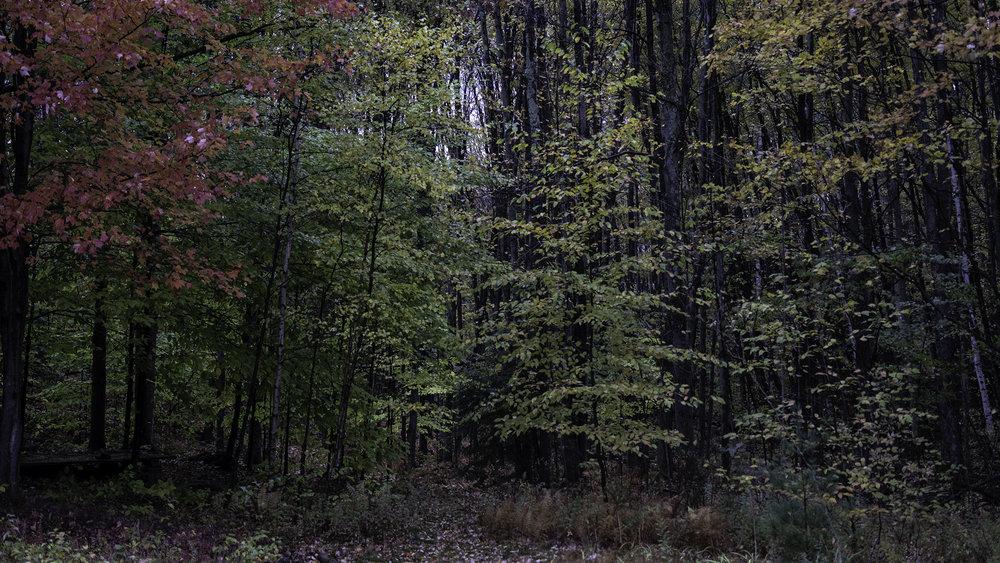 woods-1-web.jpg