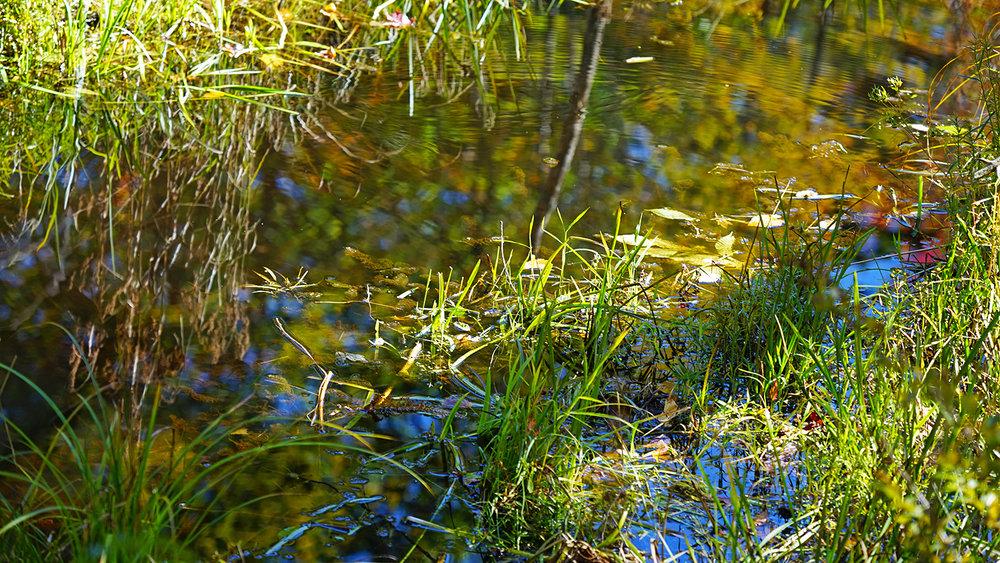 reflection-w.jpg