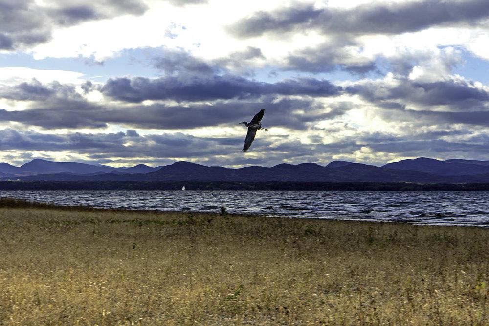 shoreline-bird-w.jpg