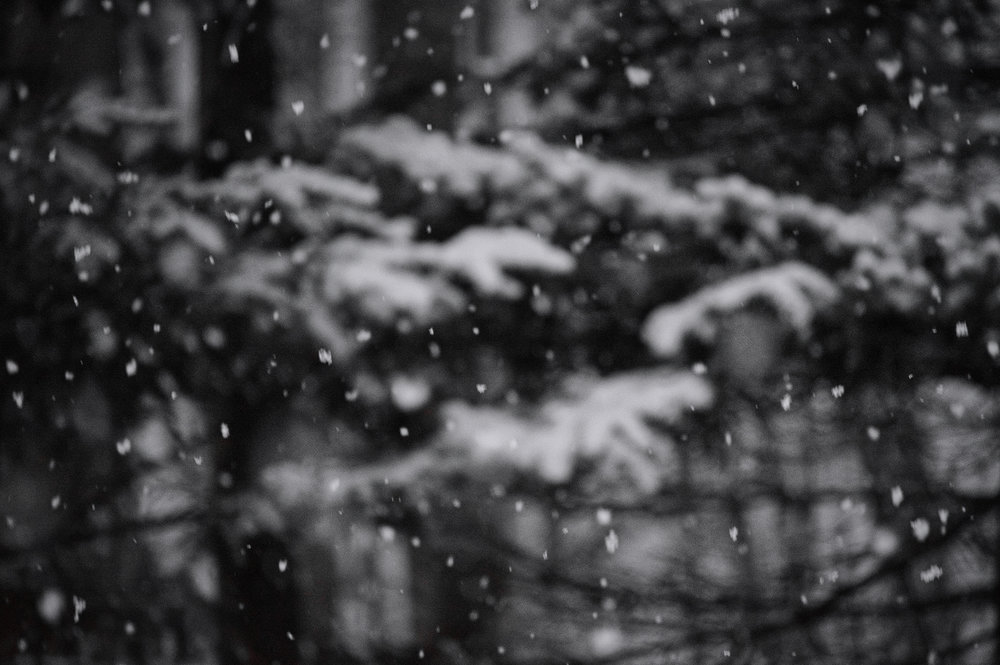 snowfall-w.jpg