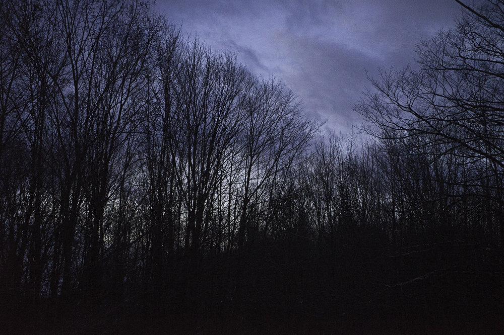 treessundown-1-w.jpg