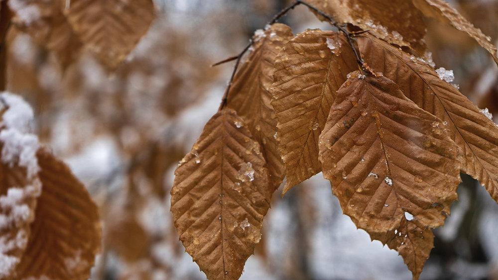 leaves-web.jpg