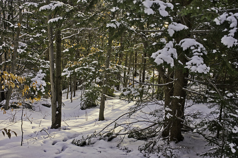 woods-12.19.18-w.jpg