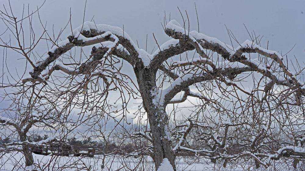 tree-w-insta.jpg