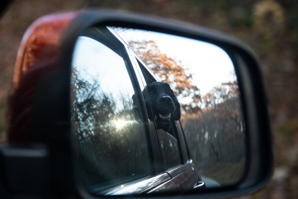 dog-through-mirror-passanger-side-black-lab-road-trip-fall-color-head-out-window