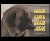 DOG EGGS.jpg