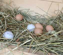 photo_eggs 2.jpg
