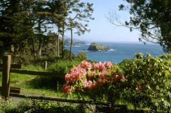 Beach Trail Cottage_garden view.jpg