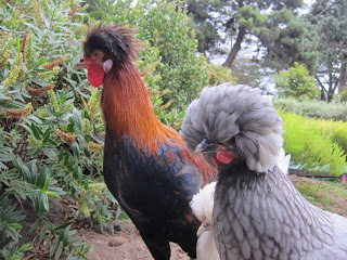 some of the free-ranging showgirls, in the gardens
