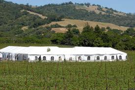 the festival tent, goldeneye winery, anderson valley