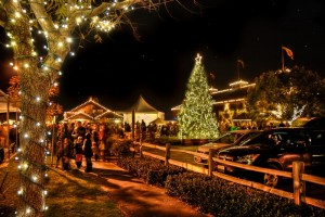 Festival of Lights, photo mendocino botanical gardens