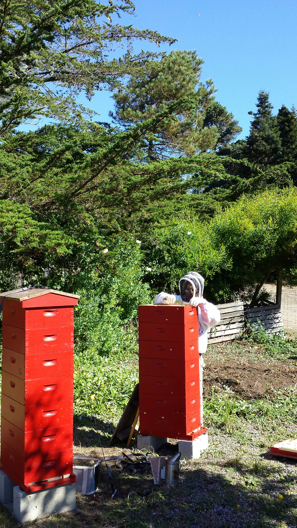 Bee hives fall tall Glendeven.jpg