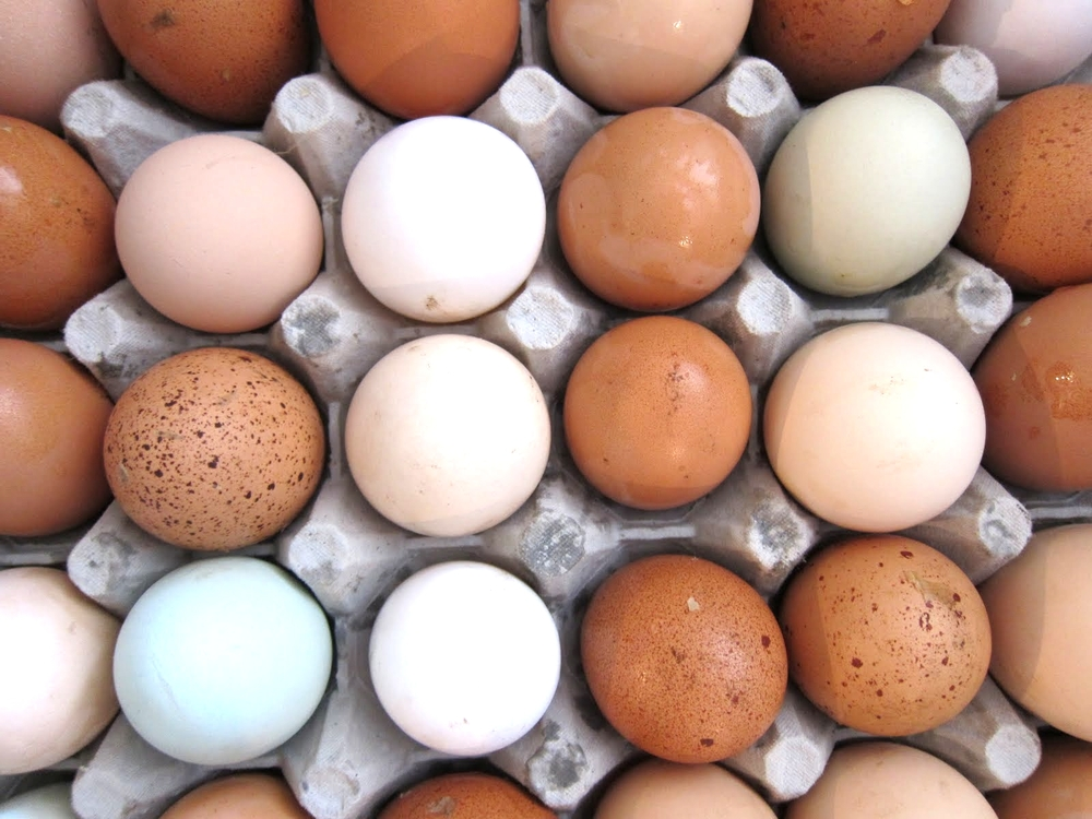 eggs in crate.jpg