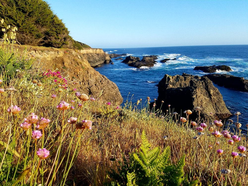headlands cobblers walk trail with wildflowers.jpg