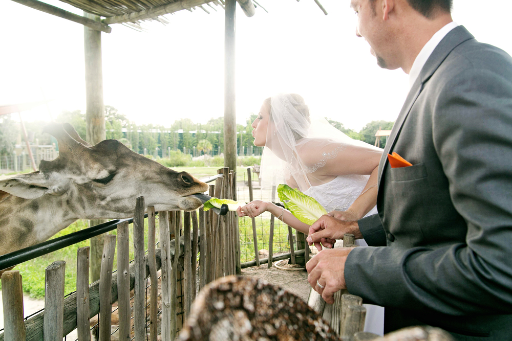 Tampa Lowry Zoo Wedding Photographer-225.jpg