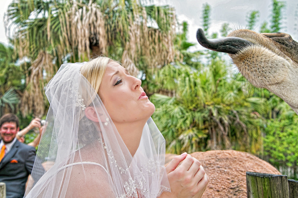 Tampa Lowry Zoo Wedding Photographer-231.jpg