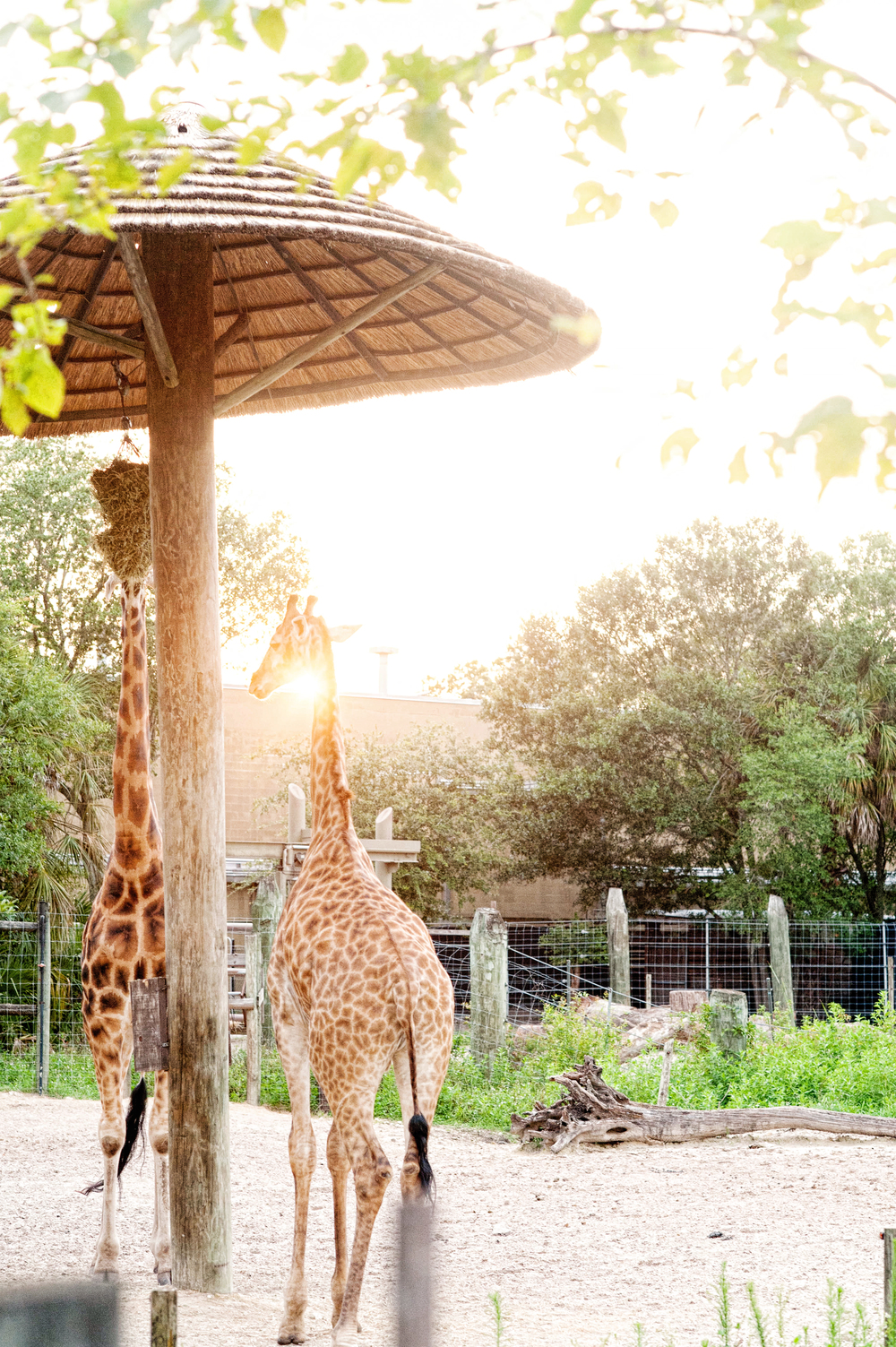 Tampa Lowry Zoo Wedding Photographer-327.jpg