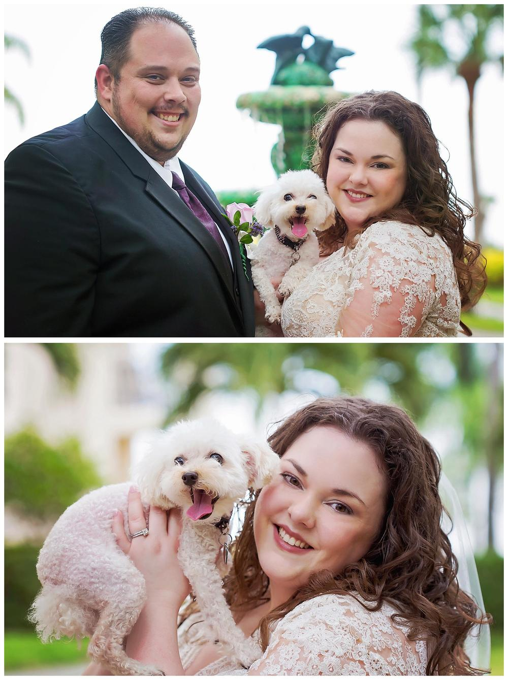 Safety harbor dog wedding