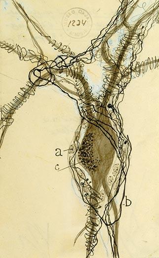 brains-santiago-ramon-y-cajals-drawing-neuron-body-4.jpg