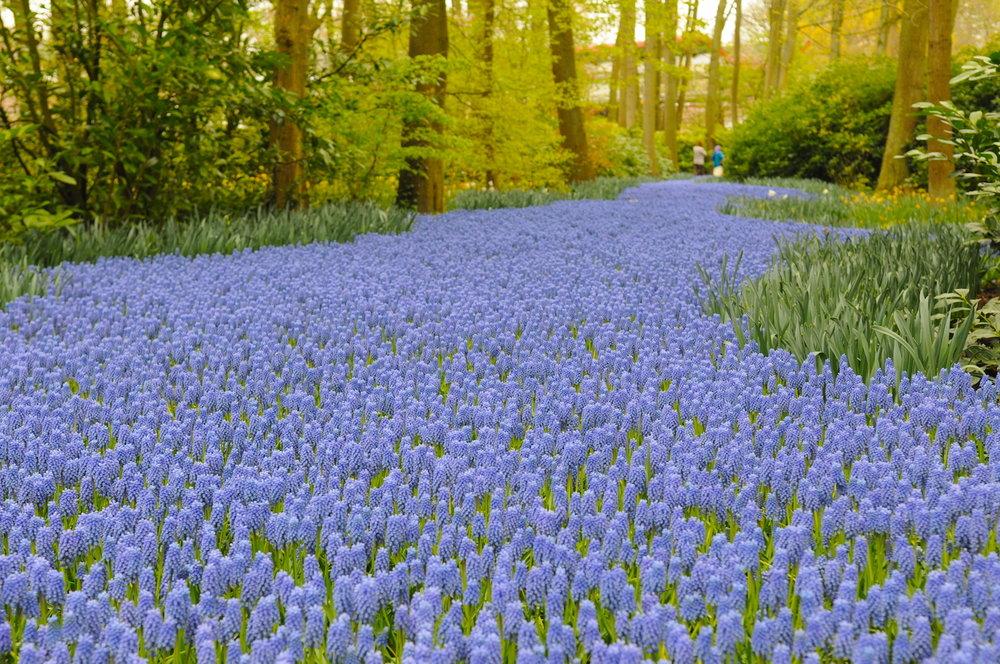 一些旅行建议: - 库肯霍夫、艾丹和谢默霍恩:汇聚鲜花和旅行亮点之地。我们将在您所下榻的酒店迎接您,并驱车前往著名的库肯诺夫花园(距阿姆斯特丹约一小时车程)。我们将在这个巨大的年度花卉公园里漫步2到3个小时。之后,我们将前往艾丹,这是一座从十二世纪就存在的小镇,这里以享誉国际的艾丹奶酪而闻名于世。然后,我们将驱车通过贝姆斯特尔圩田。这里凭借在十七世纪已闻名的完美设计和改进的水资源管理,被载入世界遗产名录。我们将在谢默霍恩圩田观赏到很多风车。其中一座被改建成美丽博物馆的风车,将是我们的参观地点。