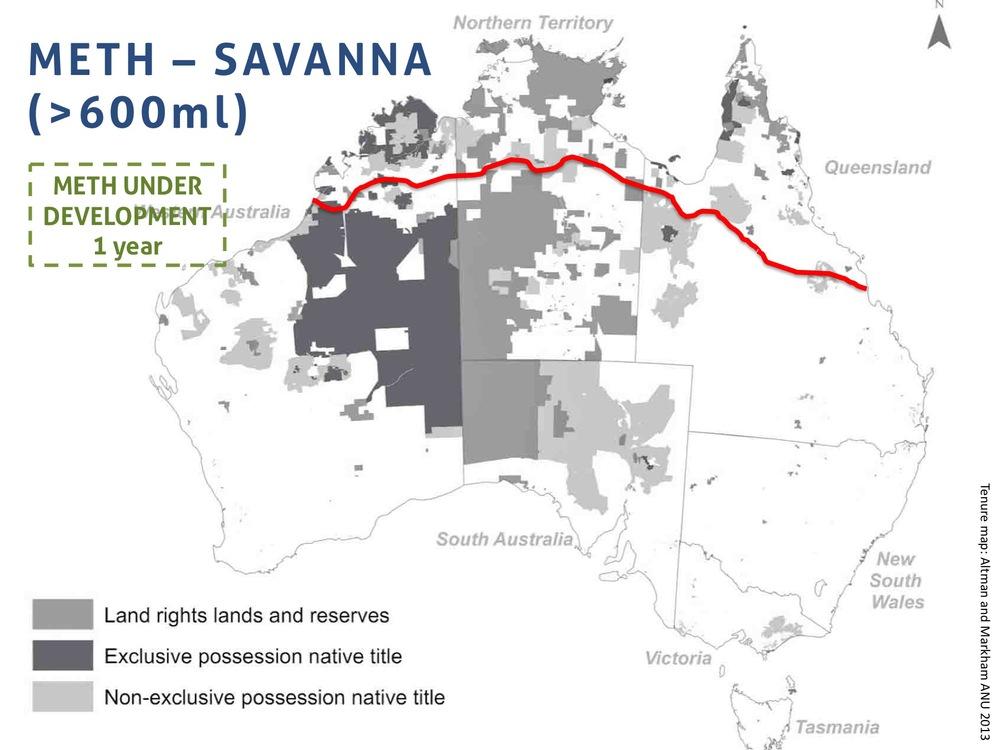savanna 600.jpg