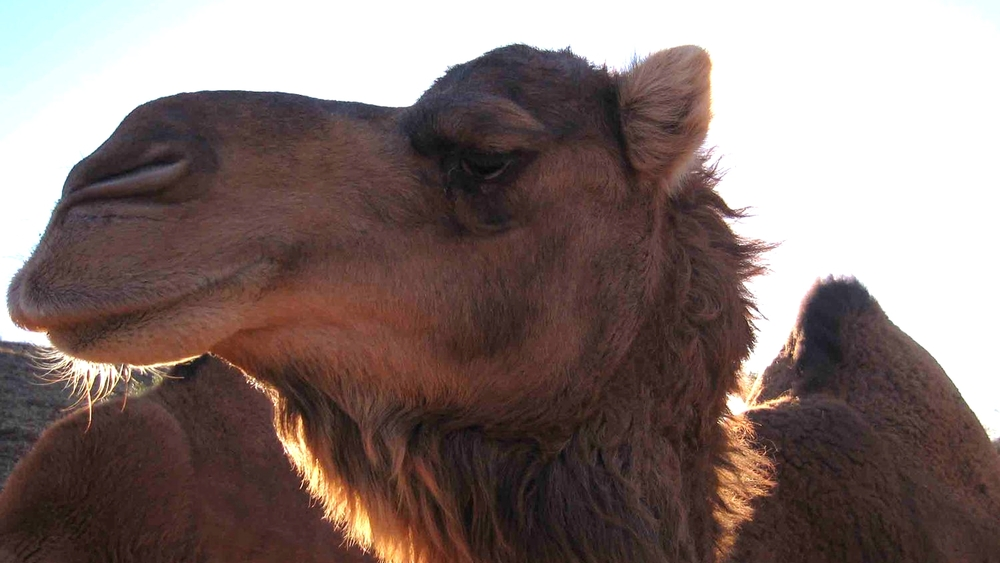 Have we seen the last of camel methodologies?