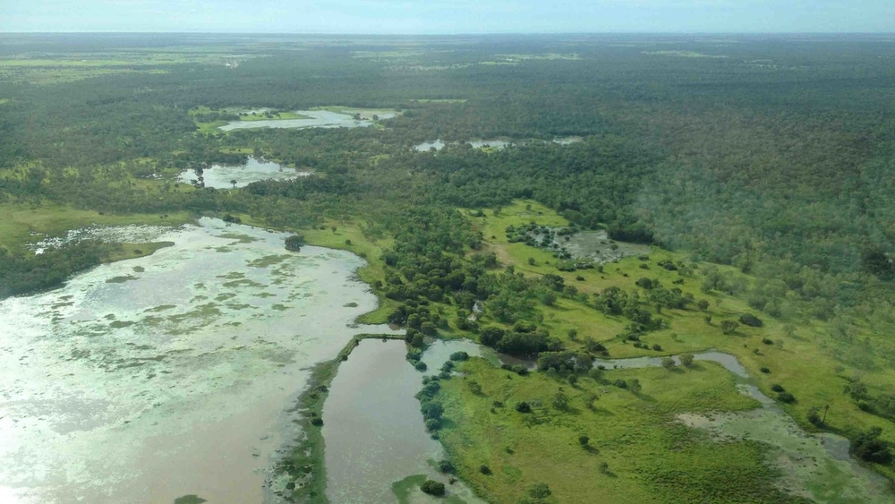 Savanna country: flood out plains of the Mitchell River delta in Cape York