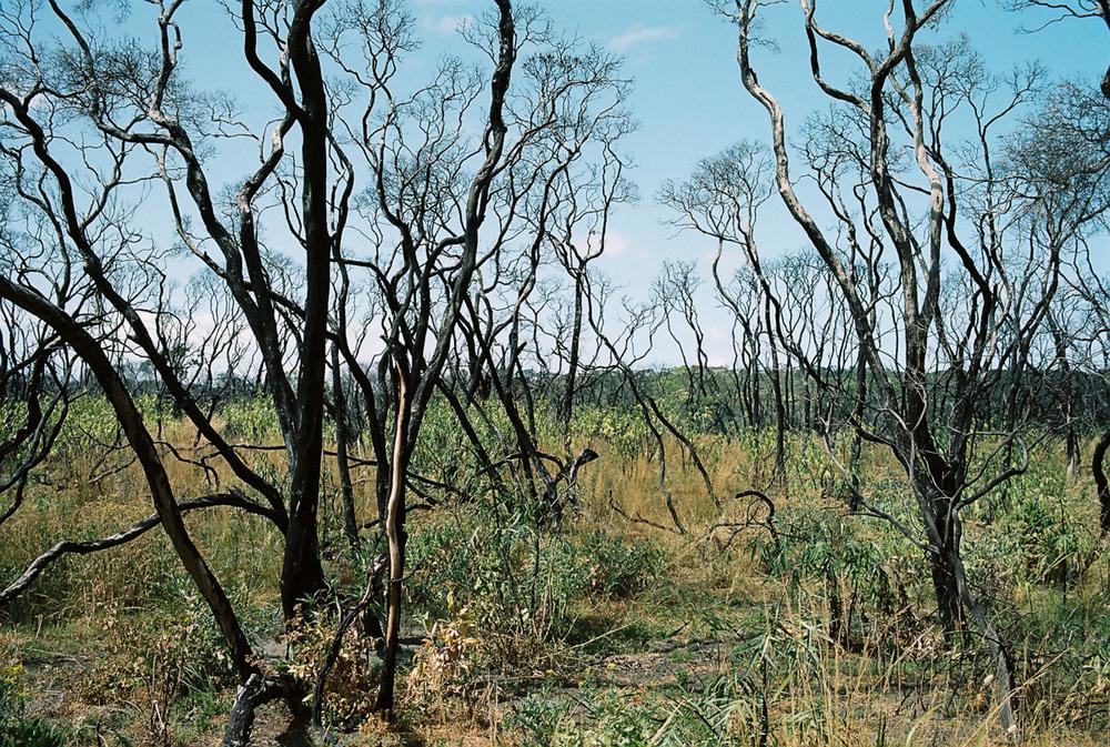 Bushfire damage outside Melbourne