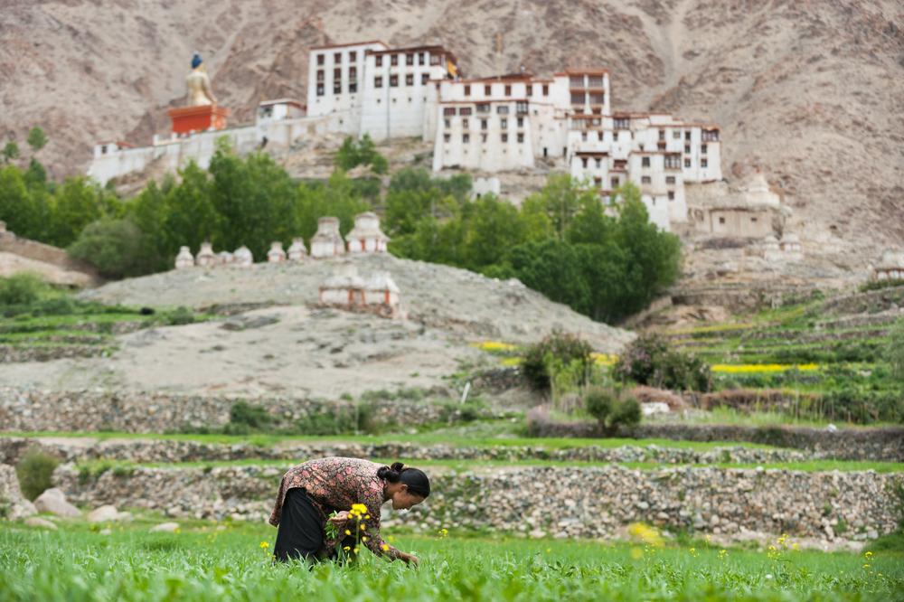 Likir, Ladakh, India