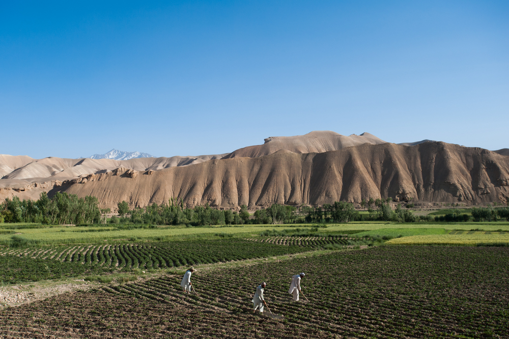Afghanistan   The barren hills of the Bamiyan valley in central Afghanistan appear to promise little, but the snowmelt that issues from them allows farmers to irrigate the valley floor and grow potatoes.