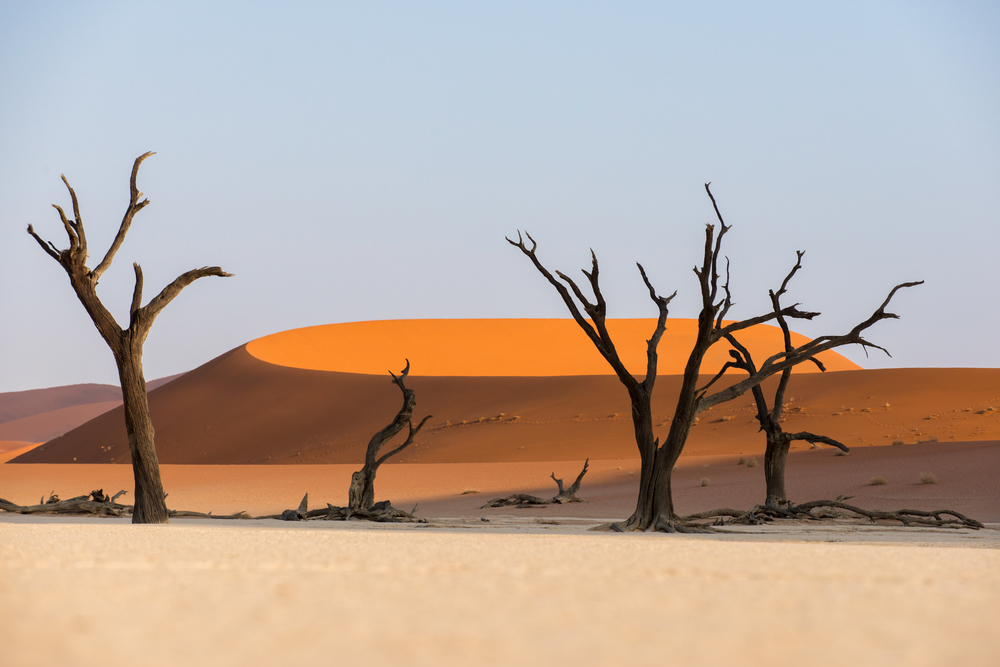 Namibia Dead Acacia trees silhouetted against sand dunes at Deadvlei in Namibia