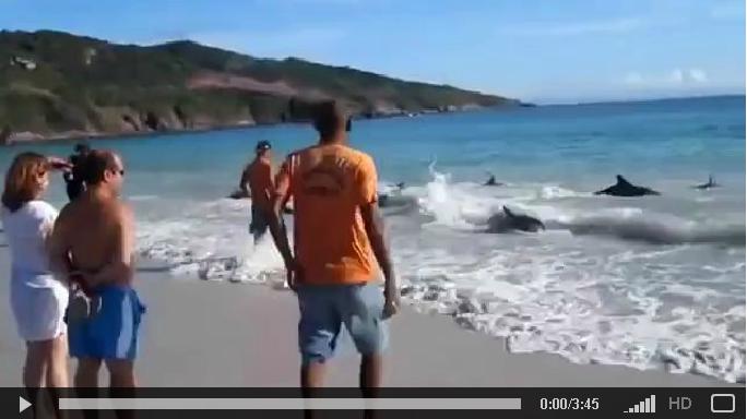 feeding dolphins swim too far...