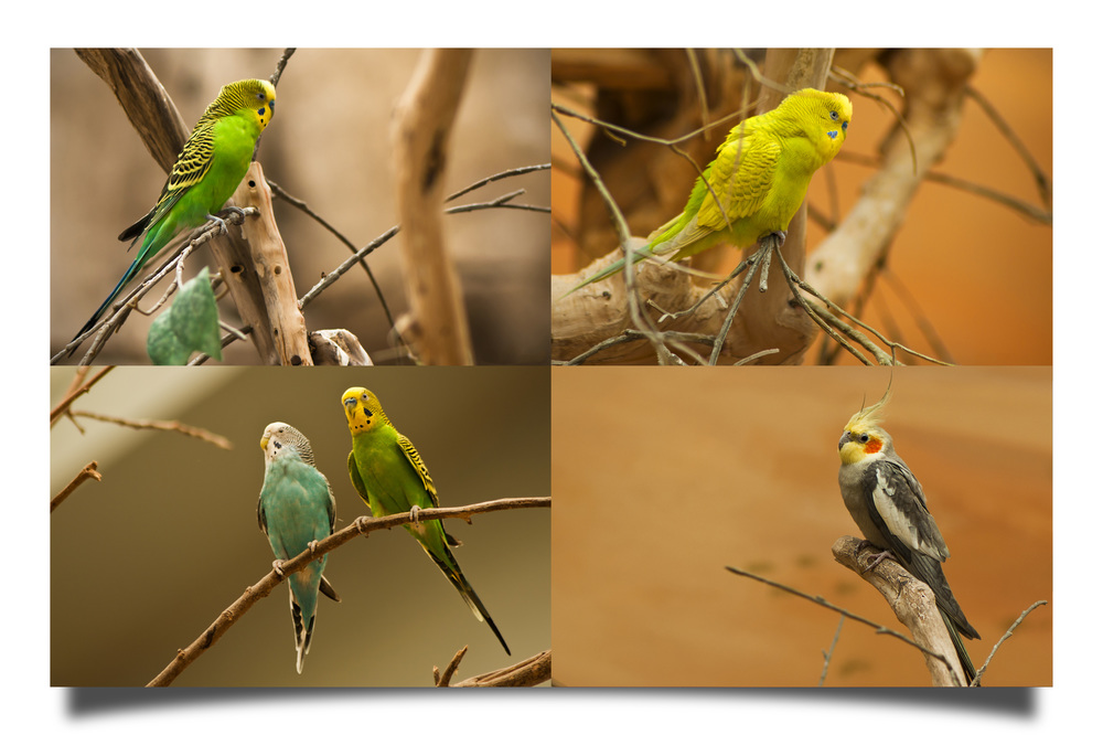 Images taken inside the Bird House, Al Ain Zoo