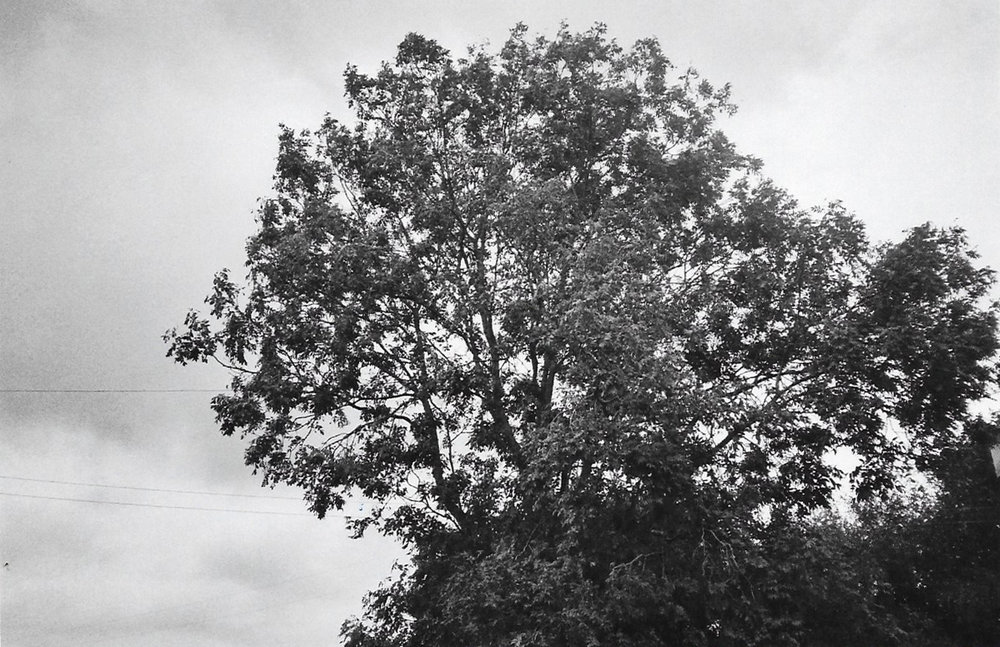 studiotreesLucyauge.jpg