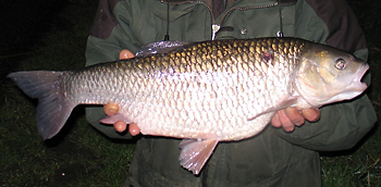 Fish of dreams, an alb chub... so a '9' next?