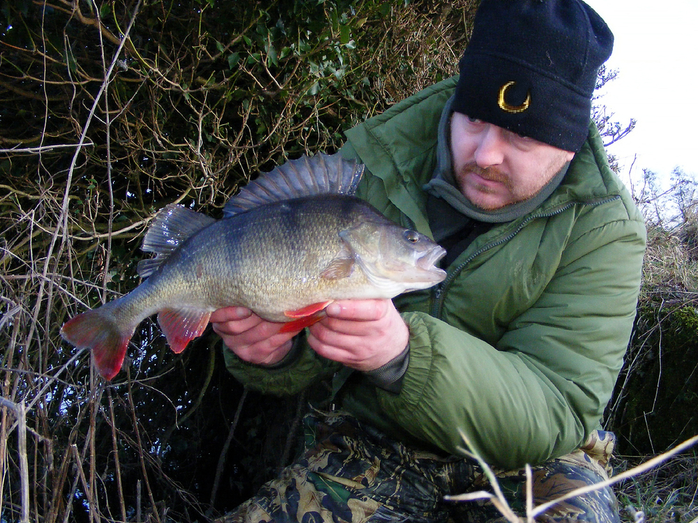 Nearly there! A cracking 3lb 10oz perch